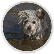 Gremlin Round Beach Towel by Jeannette Hunt