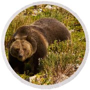 Grizzly 1 Round Beach Towel