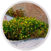 Growing In The Cracks Round Beach Towel by Brent L Ander