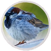 Guard Bird Round Beach Towel by Colleen Coccia
