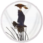 Round Beach Towel featuring the photograph Hawk On Statue by Rebecca Margraf