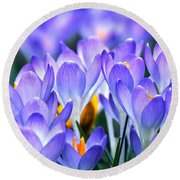 Here Come The Croci Round Beach Towel
