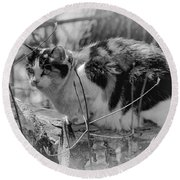 Round Beach Towel featuring the photograph Hiding by Eunice Gibb