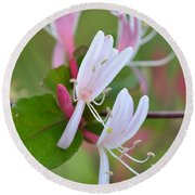 Round Beach Towel featuring the photograph Honeysuckle by JD Grimes