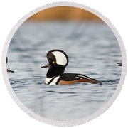 Hooded Mergansers Round Beach Towel by Mircea Costina Photography