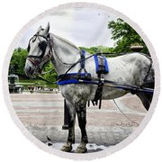 Horse In Central Park Round Beach Towel
