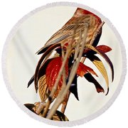 Round Beach Towel featuring the photograph House Finch Perch by Elizabeth Winter