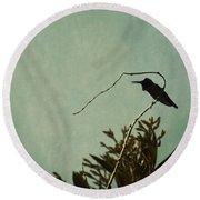 Hummingbird On Winter Wisteria Round Beach Towel