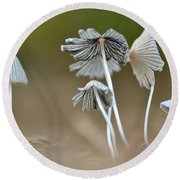 Ink-cap Mushrooms Round Beach Towel