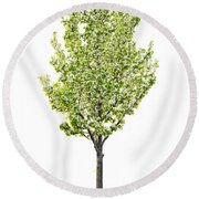 Isolated Flowering Pear Tree Round Beach Towel