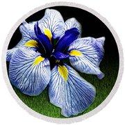 Japanese Iris Ensata - Botanical Wall Art Round Beach Towel