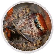 Jumping Spider Portrait Round Beach Towel by Daniel Reed