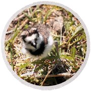 Just Hatched - Killdeer Round Beach Towel by Angie Rea