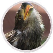 Round Beach Towel featuring the photograph Juvenile Bald Eagle by Alyce Taylor