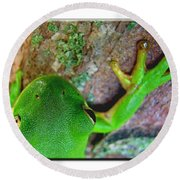 Round Beach Towel featuring the photograph Kermit's Kuzin by Debbie Portwood