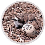 Killdeer Babies Round Beach Towel by Angie Rea
