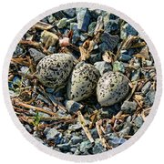 Killdeer Bird Eggs Round Beach Towel by Jennie Marie Schell