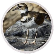 Killdeer Round Beach Towel by Saija  Lehtonen