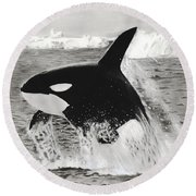 Killer Whale Round Beach Towel