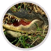 Round Beach Towel featuring the photograph King Of The Swamp by Myrna Bradshaw