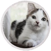Kitten In The Window Round Beach Towel by Jeannette Hunt