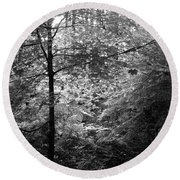 Round Beach Towel featuring the photograph Light In The Woods by Kathleen Grace