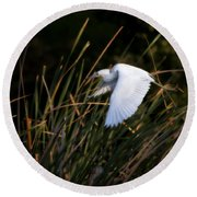 Round Beach Towel featuring the photograph Little Blue Heron Before The Change To Blue by Steven Sparks