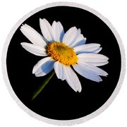 Round Beach Towel featuring the photograph Little Daisy by Karen Harrison