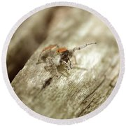 Round Beach Towel featuring the photograph Little Jumper In Sepia by JD Grimes