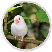 Little White Bird Round Beach Towel by Rosalie Scanlon
