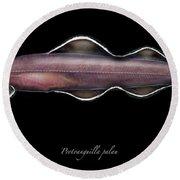 Living Fossil Eel - Protoanguilla Palau - By Maassen-pohlen Round Beach Towel