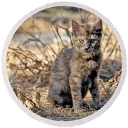 Lone Feral Kitten Round Beach Towel