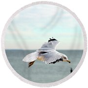 Round Beach Towel featuring the photograph Looking For Dinner by Clayton Bruster