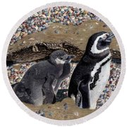 Looking Out For You - Penguins Round Beach Towel