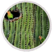 Lovebirds And The Saguaro  Round Beach Towel