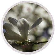 Magnolia X Loebneri  Merrill. Round Beach Towel