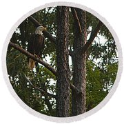 Round Beach Towel featuring the photograph Majestic Bald Eagle by Clayton Bruster