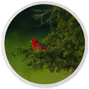 Male Cardinal In Pine Tree Round Beach Towel