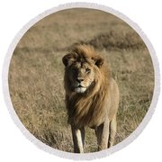 Male Lion's Gaze Round Beach Towel by Darcy Michaelchuk