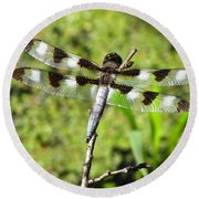 Round Beach Towel featuring the photograph Male Twelve-spotted Dragonfly by Maciek Froncisz