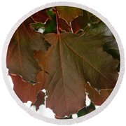 Round Beach Towel featuring the photograph Maple 2 by Tikvah's Hope