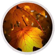 Maple At First Light Round Beach Towel