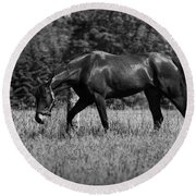 Round Beach Towel featuring the photograph Mare In Field by Davandra Cribbie