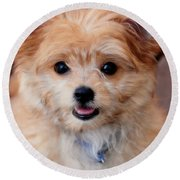 Round Beach Towel featuring the photograph Mi-ki Puppy by Angie Tirado