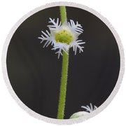 Miterwort Flowers Round Beach Towel
