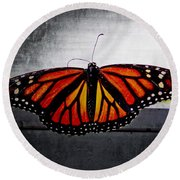 Monarch Round Beach Towel by Julia Wilcox