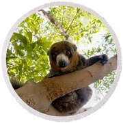 Mongoose Lemur Round Beach Towel
