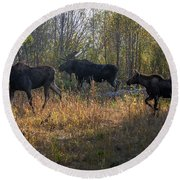 Moose Family Round Beach Towel
