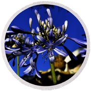 Round Beach Towel featuring the photograph Morning Blooms by Clayton Bruster