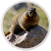 Morning Marmot Round Beach Towel